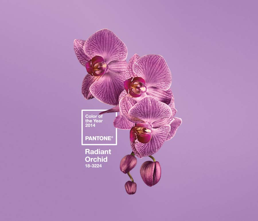 Pantone Reveals Color of the Year for 2014: Radiant Orchid